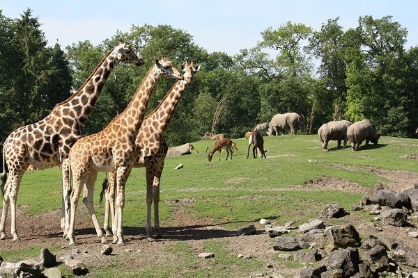 Zoos and Wildlife Parks in Netherlands